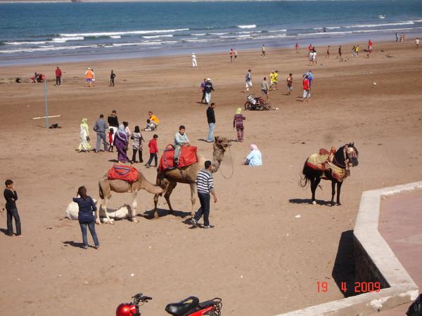 cheval sur la plage deauville